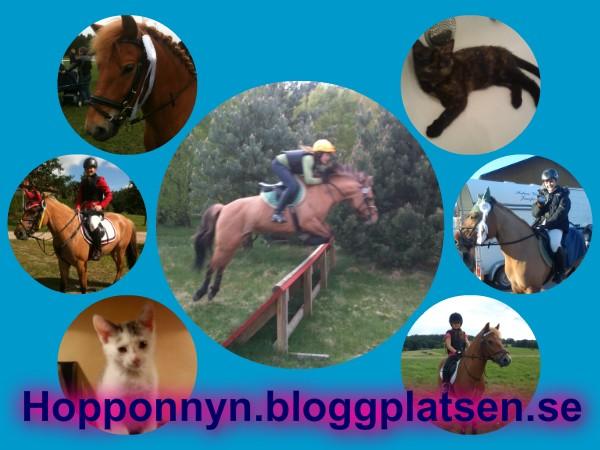 hopponnyn